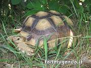 content/attachments/1920-sulcata.jpg.html