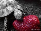 Pina_eating_a_strawberry.jpg