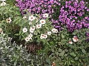 content/attachments/13430-piante-tartarughe-terrestri.jpg.html