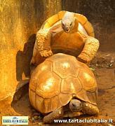 content/attachments/6361-news-da-ampijoroa-20-gennaio-2011200111_6.jpg.html
