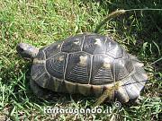 content/attachments/769-marginata-peloponneso.jpg.html