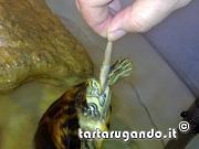 content/attachments/785-17022011849.jpg.html